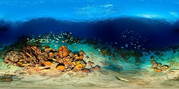 Fotoexplorer-Marcio-Cabral-360-ANT-Bonaire-002